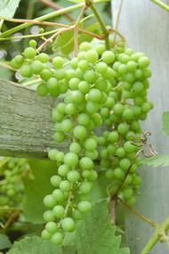 Berries3_1