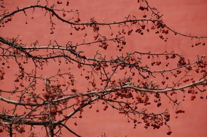Redpink